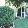Pergolas, Arbors, Decks